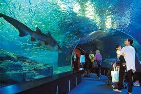 Busan Aquarium - Abroad Indians